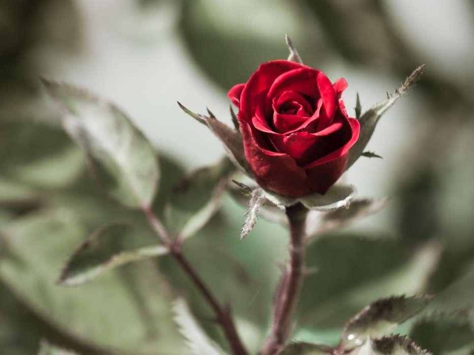 чужую цветы со смыслом фото разноцветный горошек