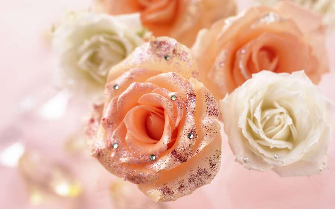 Индийские красивые картинки розы романтические природа голубы