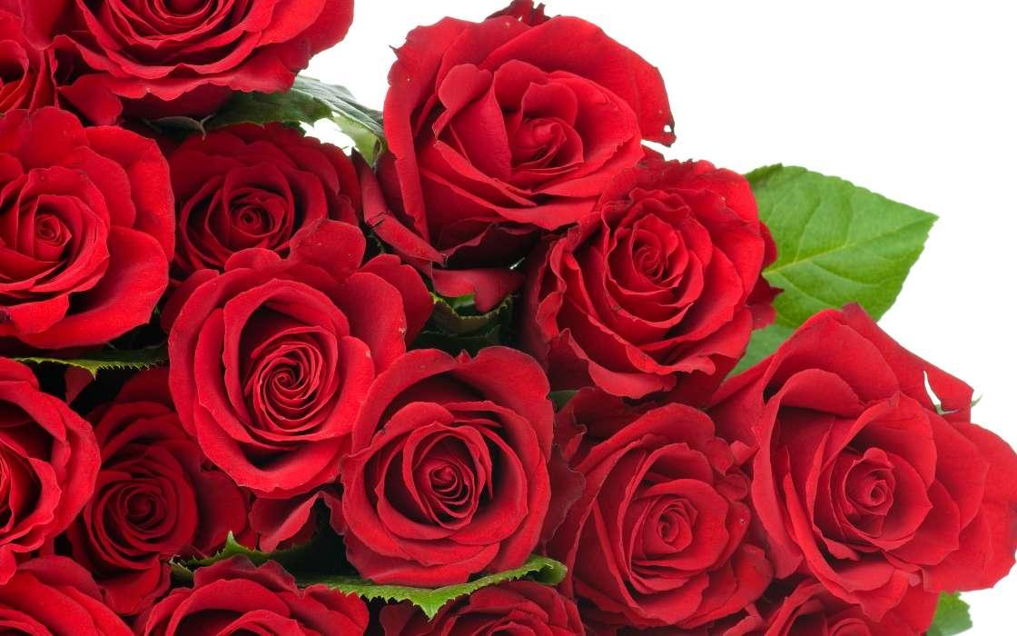 Красивые открытки цветы фото, открытка папе