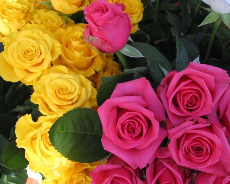 Анимация, картинка желтые розы на телефон