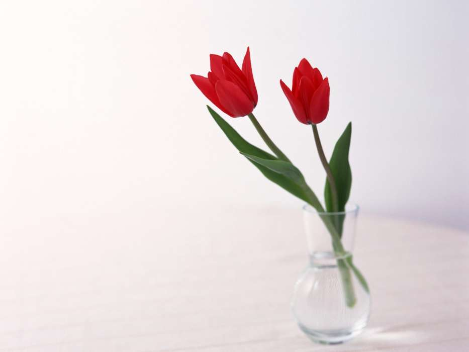 Download mobile wallpaper Plants, Flowers, Tulips for free.