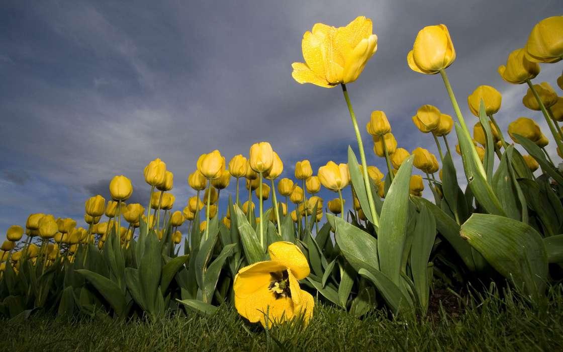 download bilder f r das handy pflanzen blumen tulpen kostenlos 38102. Black Bedroom Furniture Sets. Home Design Ideas