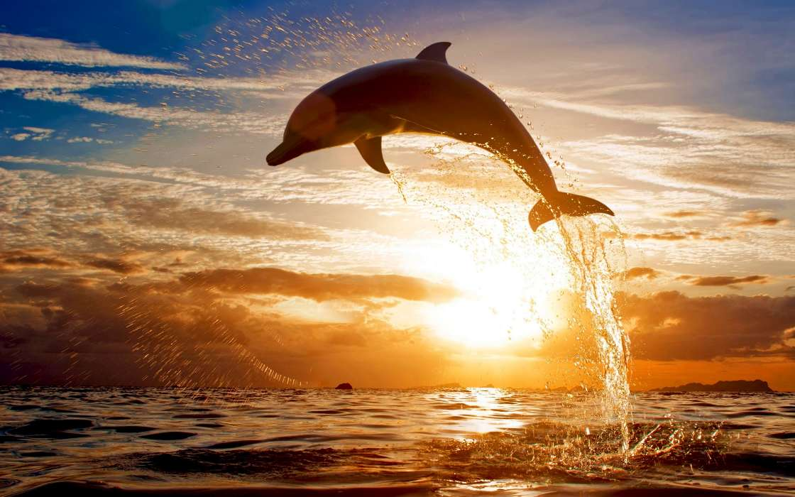 Download mobile wallpaper Animals, Landscape, Dolfins for free.