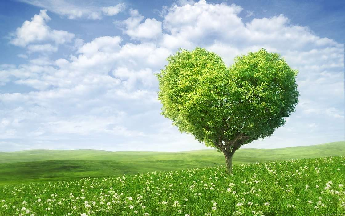 Download mobile wallpaper Holidays, Plants, Landscape, Trees, Fields, Sky, Hearts, Clouds, Love, Valentine's day for free.