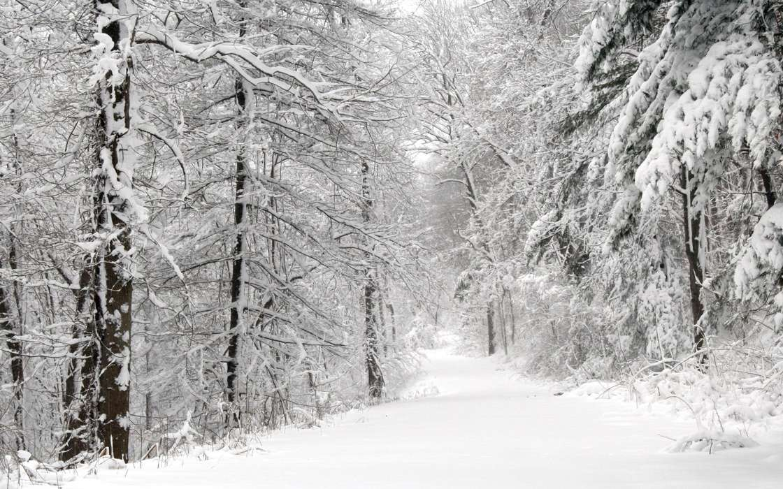 Download mobile wallpaper Landscape, Winter, Nature, Trees, Roads, Snow, Fir-trees for free.