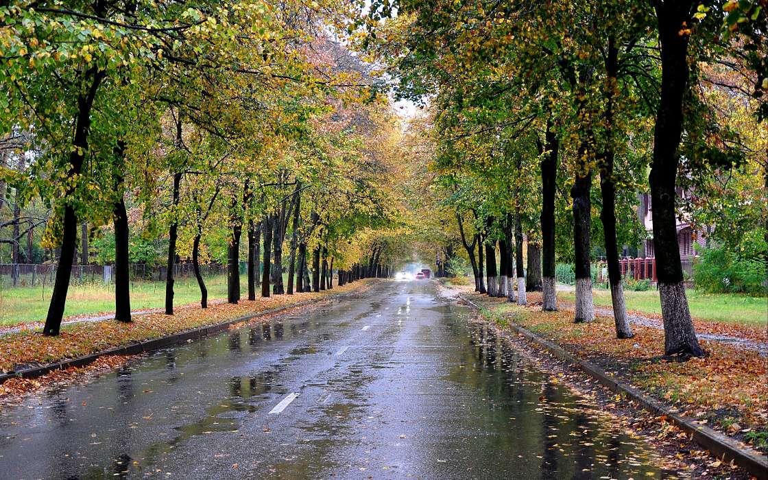 они фото дождливой осени в парке иском расторжении