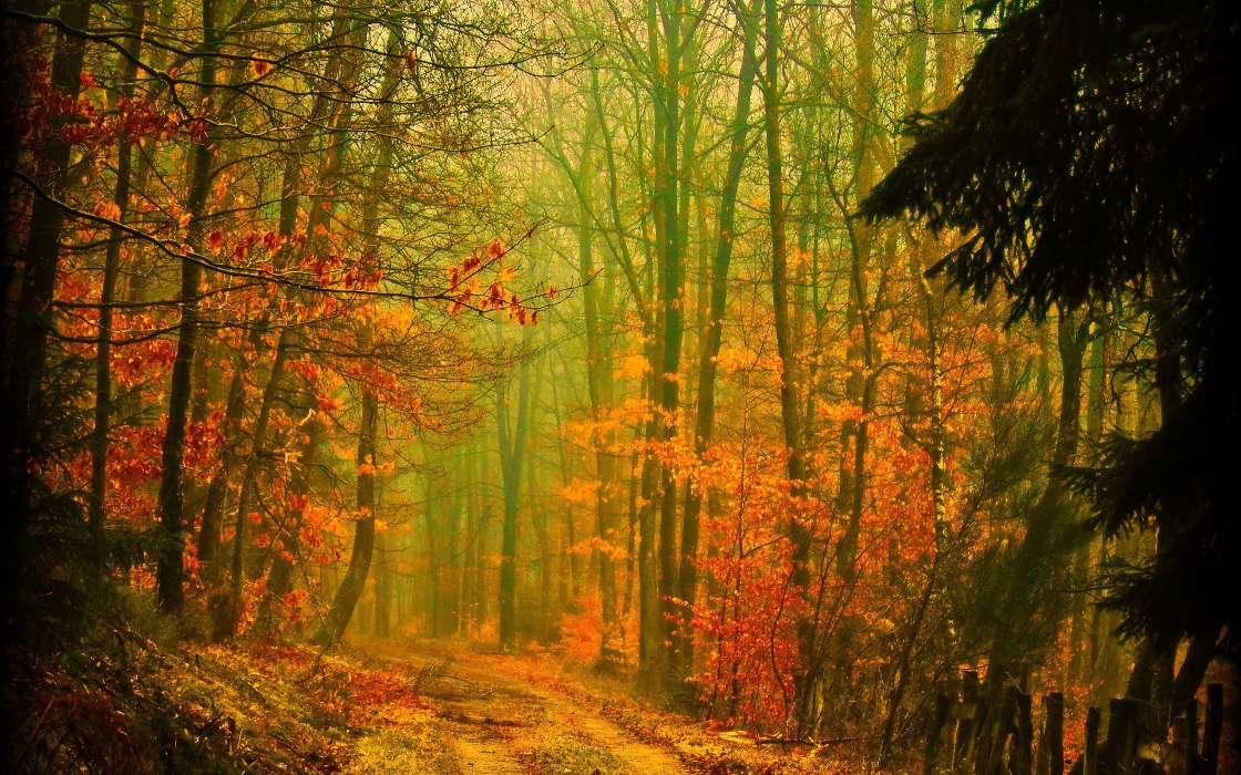 Download mobile wallpaper Landscape, Trees, Roads, Autumn for free.