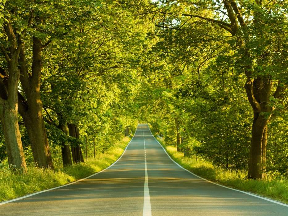 Download mobile wallpaper Landscape, Trees, Roads for free.