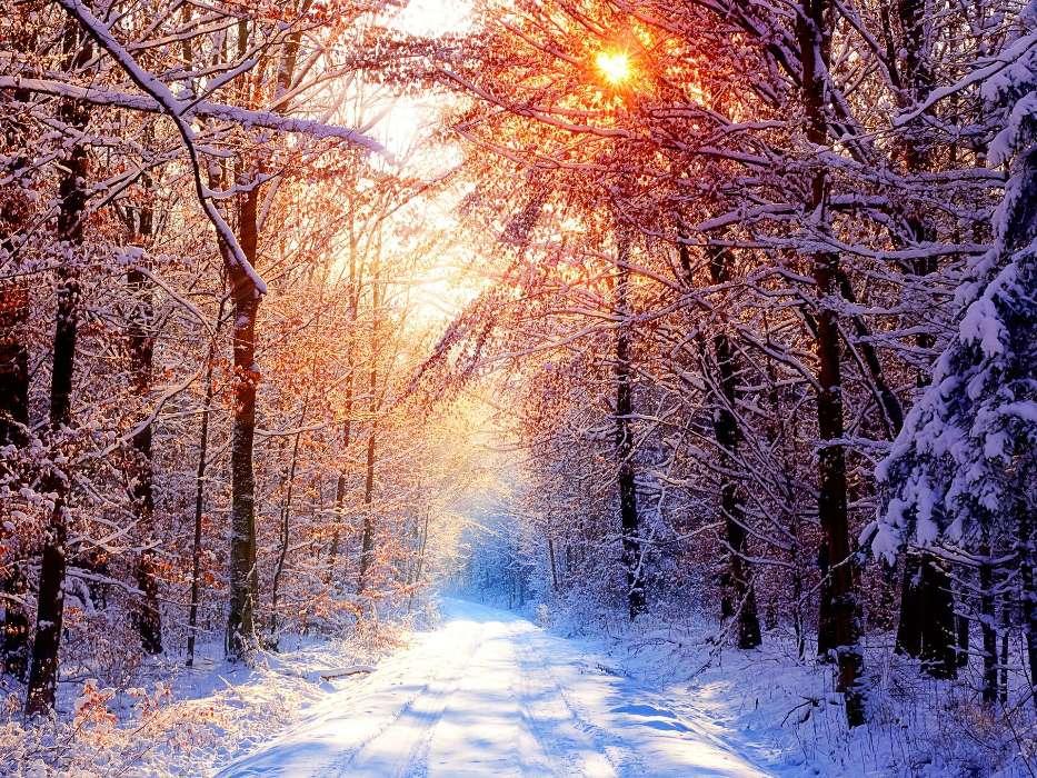Descargar la imagen en tel fono paisaje invierno rboles carreteras sol gratis 10243 - Caser asistencia en carretera telefono ...