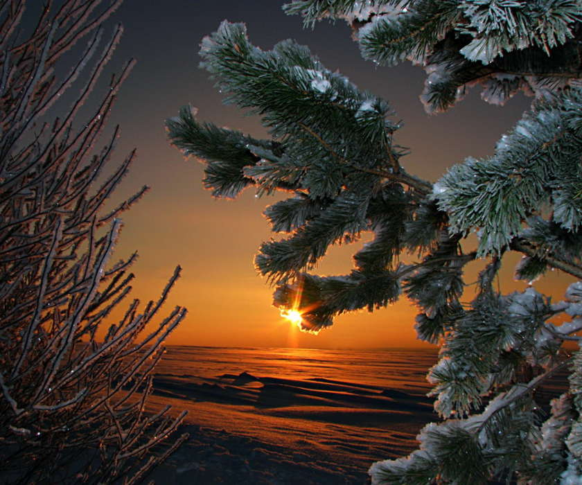 Download mobile wallpaper Plants, Trees, Sunset, Background, Fir-trees for free.