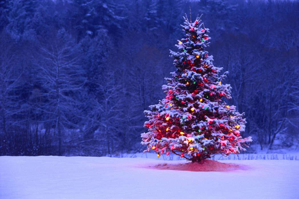 O Tannenbaum Download Kostenlos.Download Bilder Für Das Handy Feiertage Landschaft Bäume Neujahr