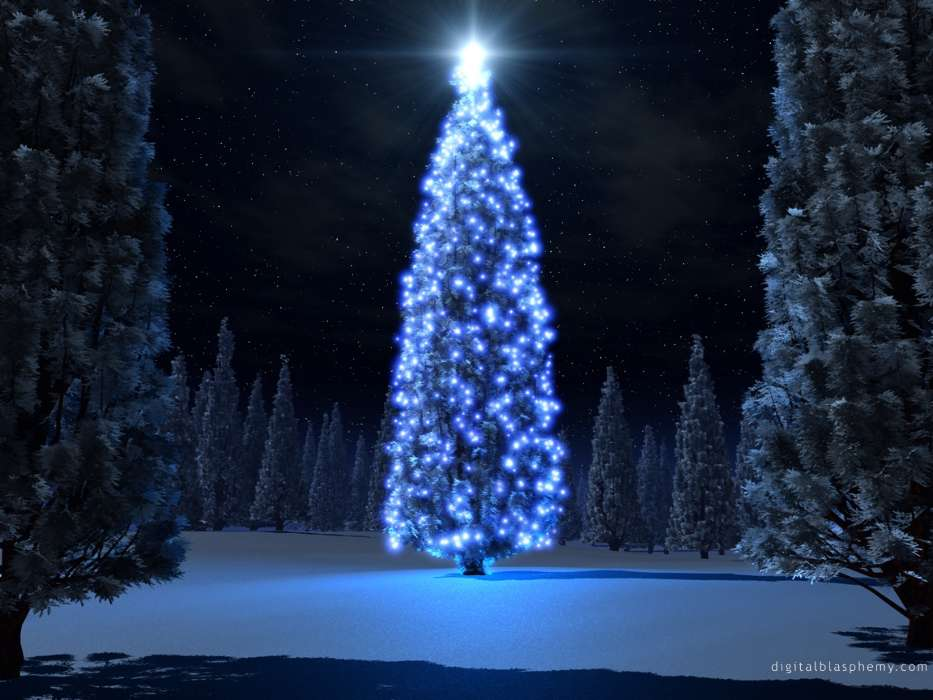 Download mobile wallpaper Holidays, Trees, New Year, Fir-trees, Christmas, Xmas for free.