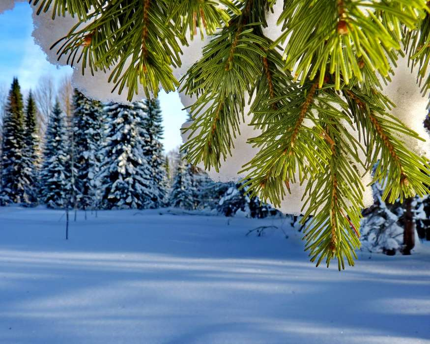 Download mobile wallpaper Plants, Landscape, Winter, Trees, Snow, Fir-trees for free.