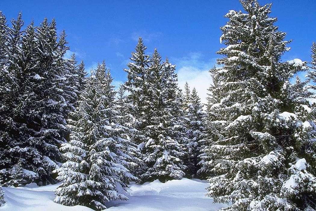 ранеепо картинки елочек зимой таким способом