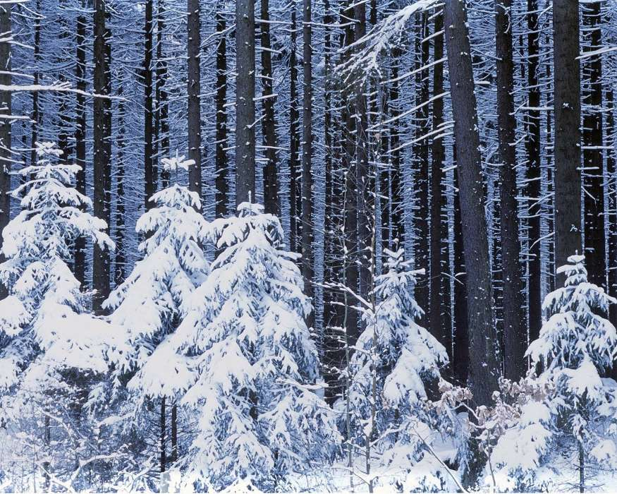 Download mobile wallpaper Landscape, Winter, Trees, Snow, Fir-trees for free.