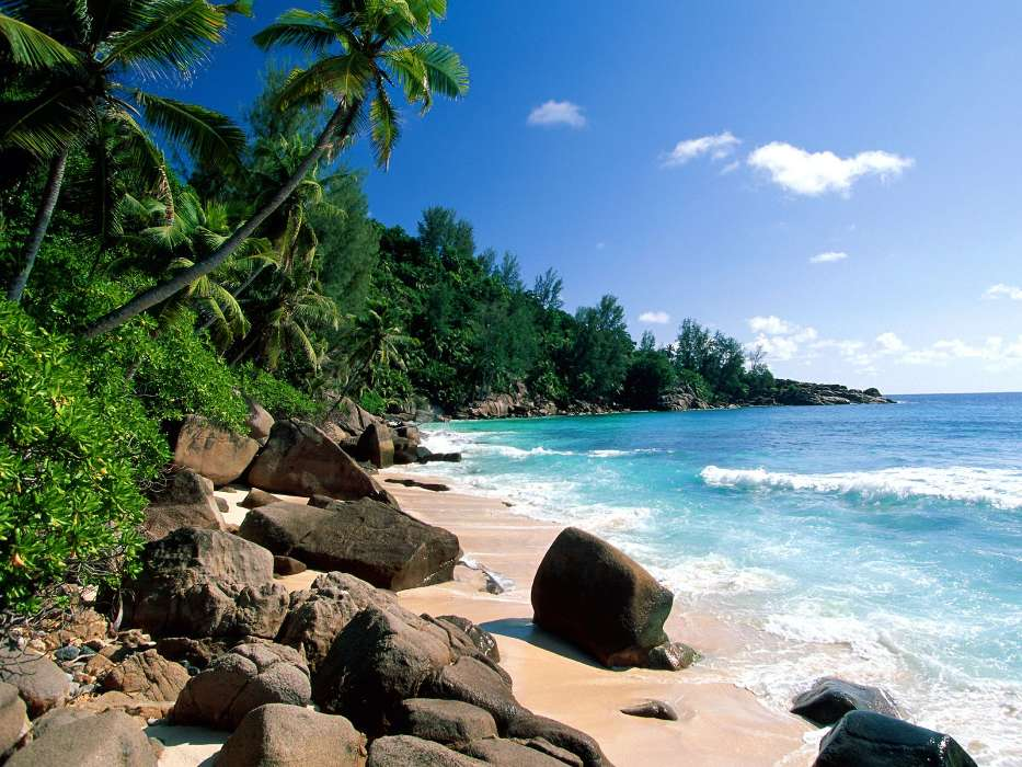 Download mobile wallpaper Landscape, Trees, Sea, Beach, Palms, Summer for free.