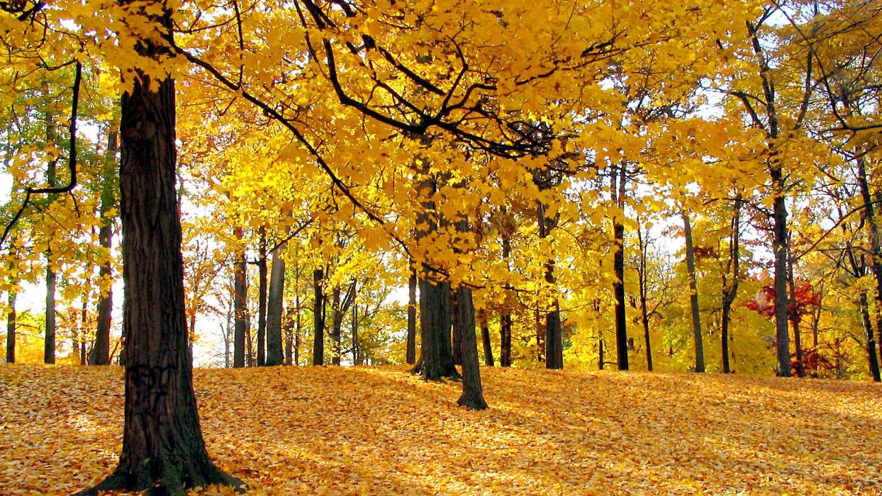 Download mobile wallpaper Landscape, Trees, Autumn, Leaves for free.