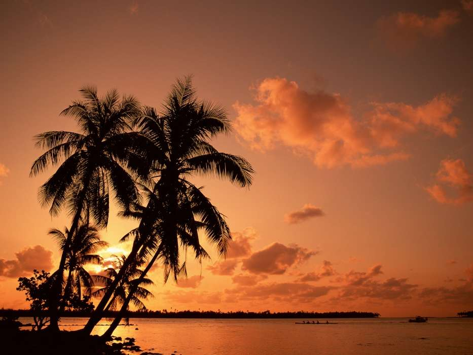 Download mobile wallpaper Landscape, Trees, Sunset, Sky, Sea, Palms for free.
