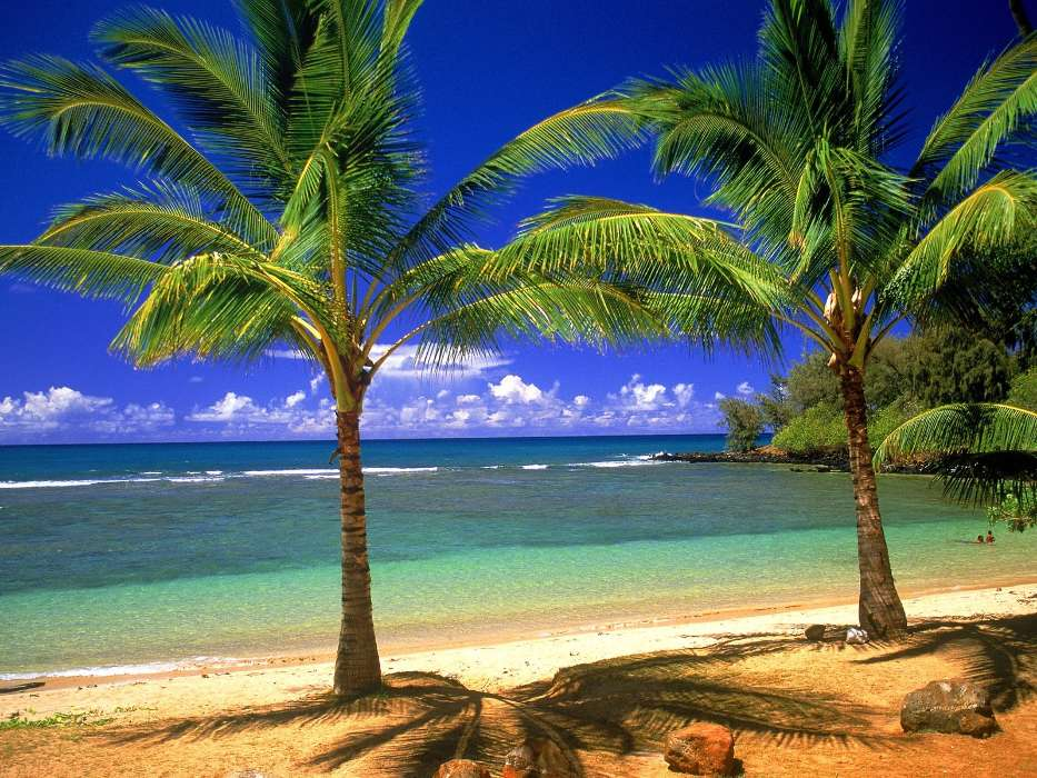 Download mobile wallpaper Landscape, Trees, Sea, Beach, Palms for free.