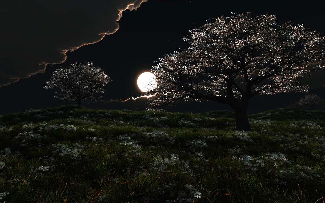 того, картинки деревьев ночью фарфор гораздо доступнее