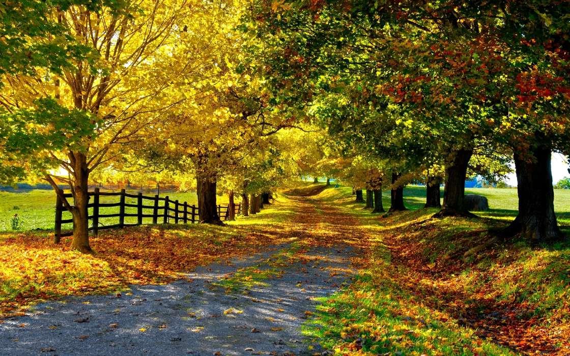 download bilder für das handy landschaft bäume herbst