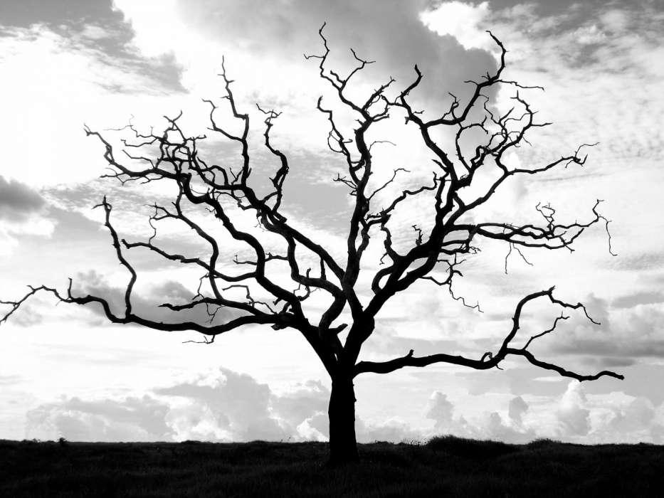 черное дерево картинка заметил