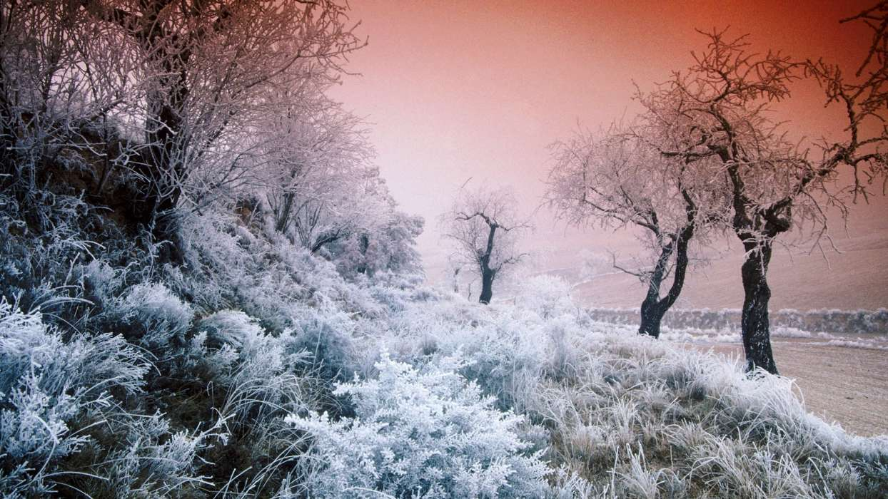 Download mobile wallpaper Landscape, Winter, Nature, Trees for free.