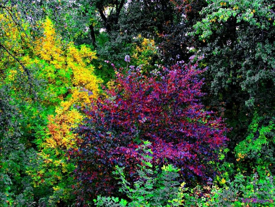 картинки с кустами в лесу вариантов