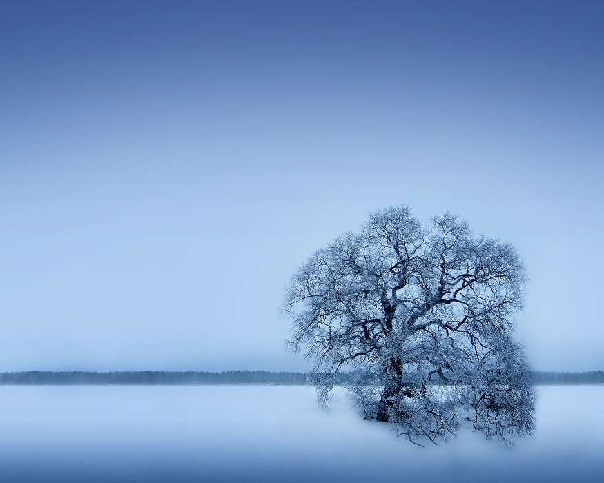 Download mobile wallpaper Landscape, Winter, Trees for free.
