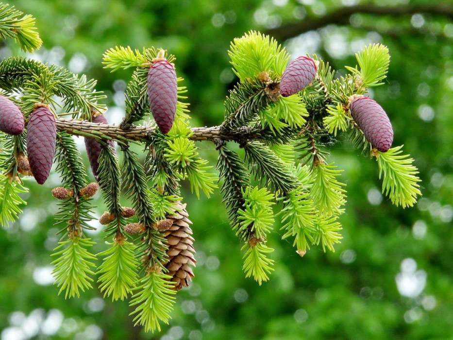 Download mobile wallpaper Landscape, Nature, Cones, Fir-trees for free.