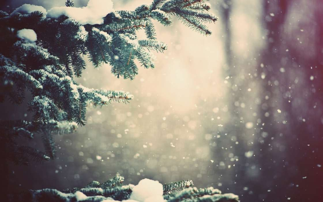 Download mobile wallpaper Plants, Landscape, Winter, Snow, Fir-trees for free.