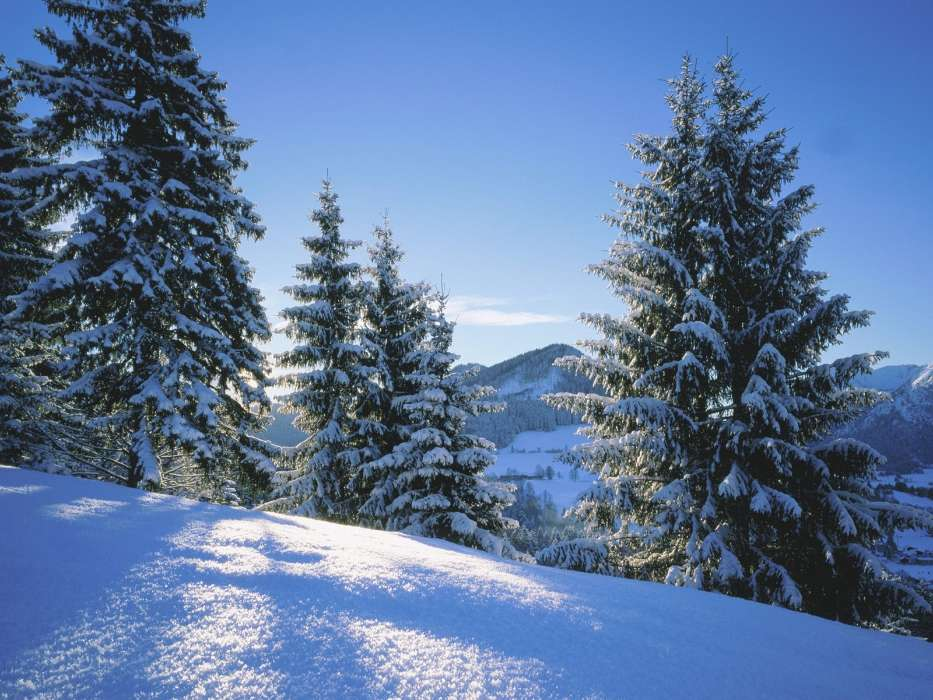 Download mobile wallpaper Landscape, Winter, Fir-trees for free.