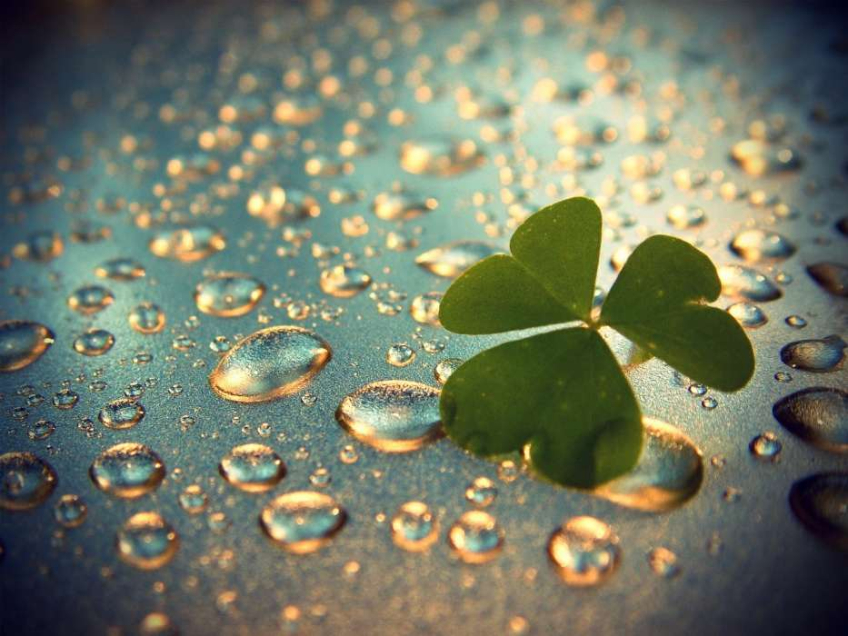Download mobile wallpaper Plants, Water, Background, Leaves, Drops for free.