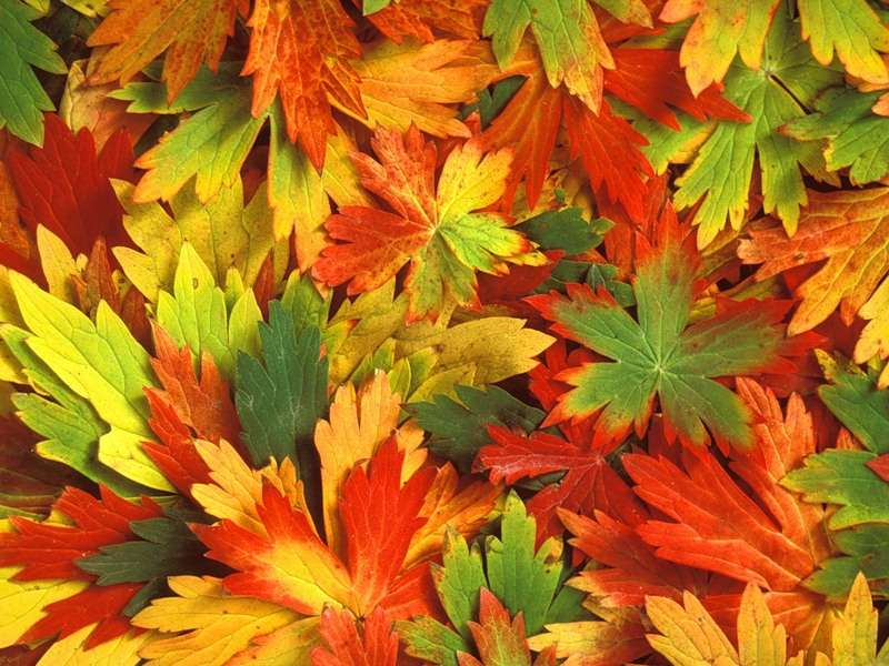 Download mobile wallpaper Background, Autumn, Leaves for free.