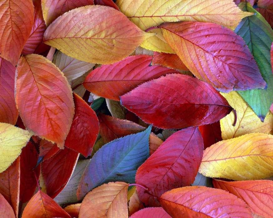 красивые картинки разных листьев