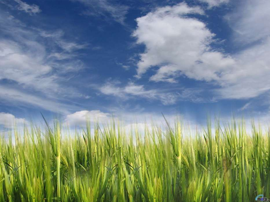 Download mobile wallpaper Landscape, Fields, Background, Sky, Clouds for free.