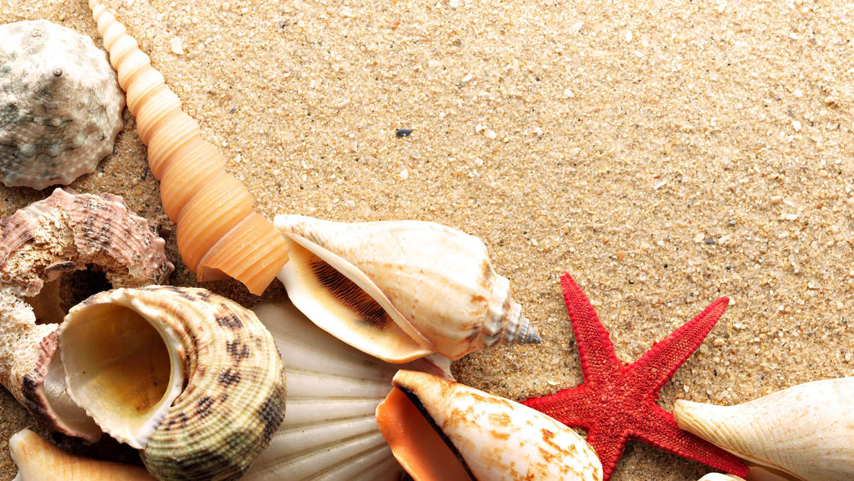 Download mobile wallpaper Background, Objects, Shells for free.