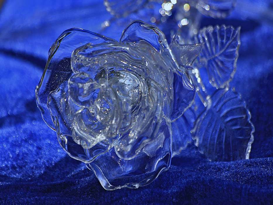 Картинки с розами во льду
