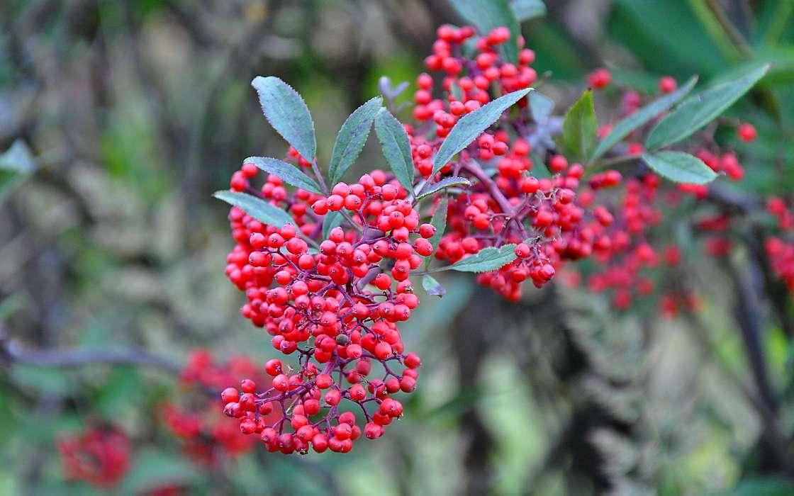 download bilder f r das handy pflanzen berries kostenlos 29202. Black Bedroom Furniture Sets. Home Design Ideas