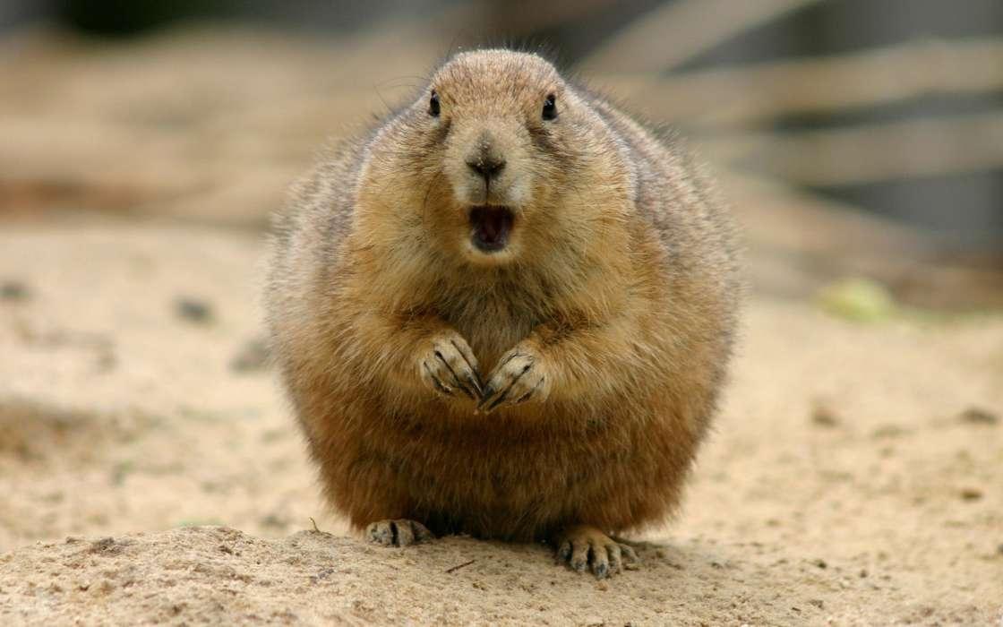 Толстые животные смешные картинки