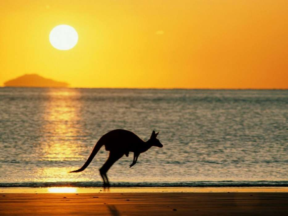 Download mobile wallpaper Animals, Landscape, Sunset, Sea, Beach, Kangaroo for free.