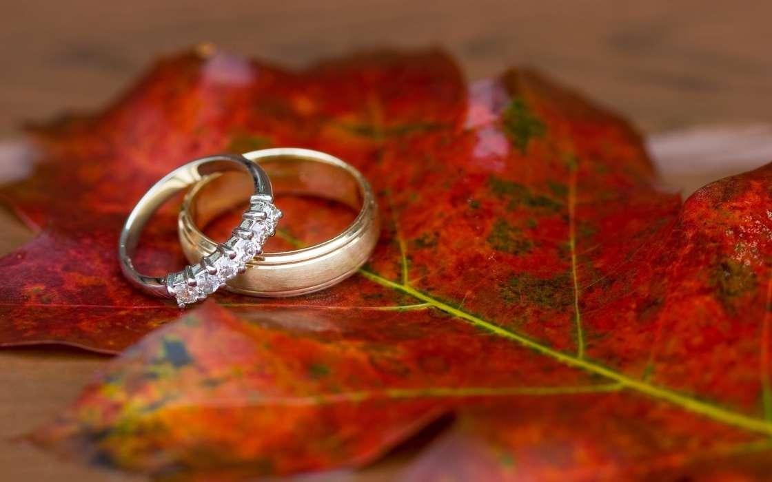 Download Bilder Fur Das Handy Feiertage Hochzeit Ringe Kostenlos