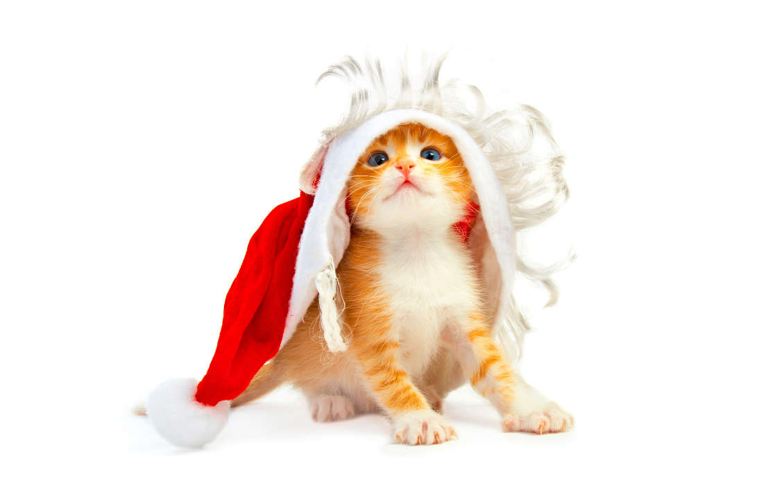 Download mobile wallpaper Holidays, Animals, Cats, New Year, Christmas, Xmas, Postcards for free.
