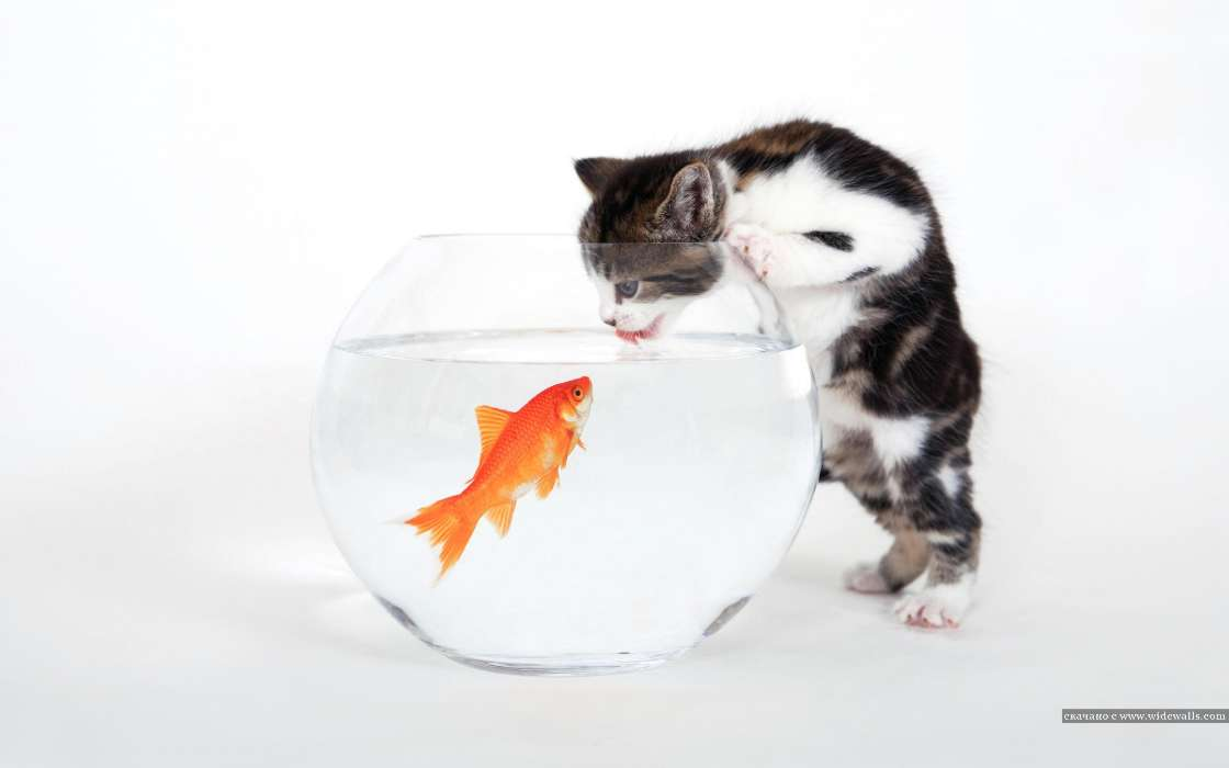 Download mobile wallpaper Funny, Animals, Cats, Fishes for free.