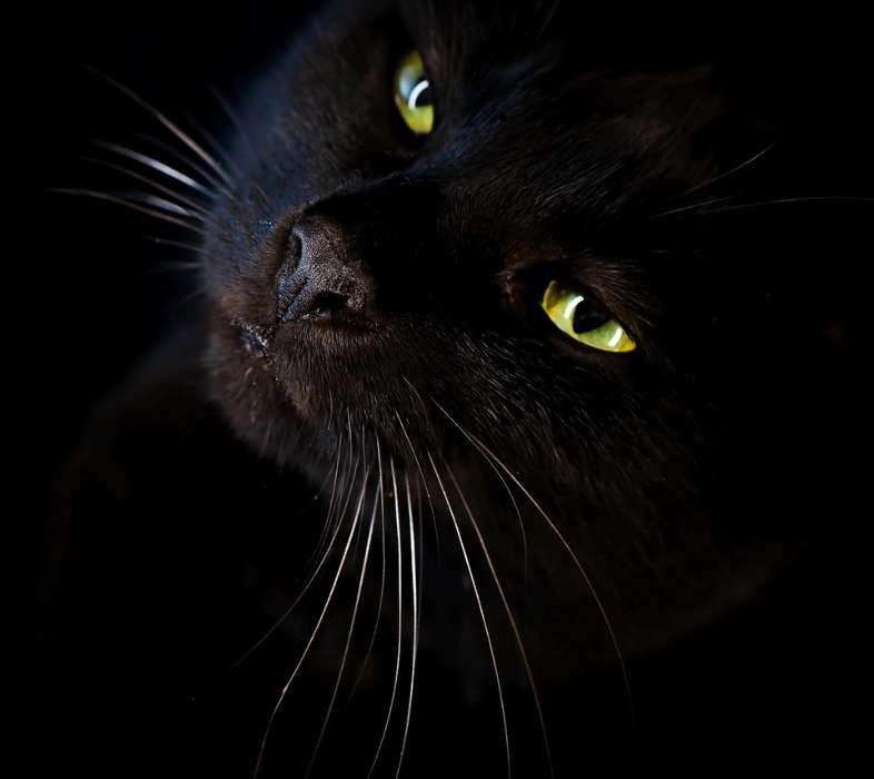День рождения, картинки с черными котами на телефон