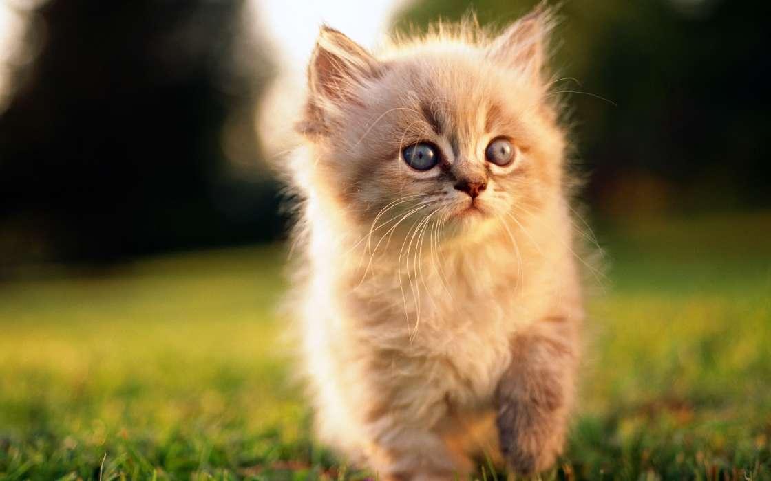 Download Bilder Für Das Handy Tiere Katzen Kostenlos 24117