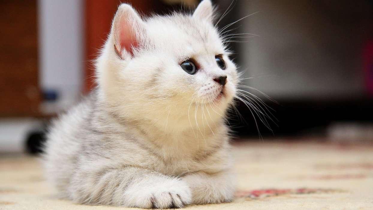 Картинки телефон кошками