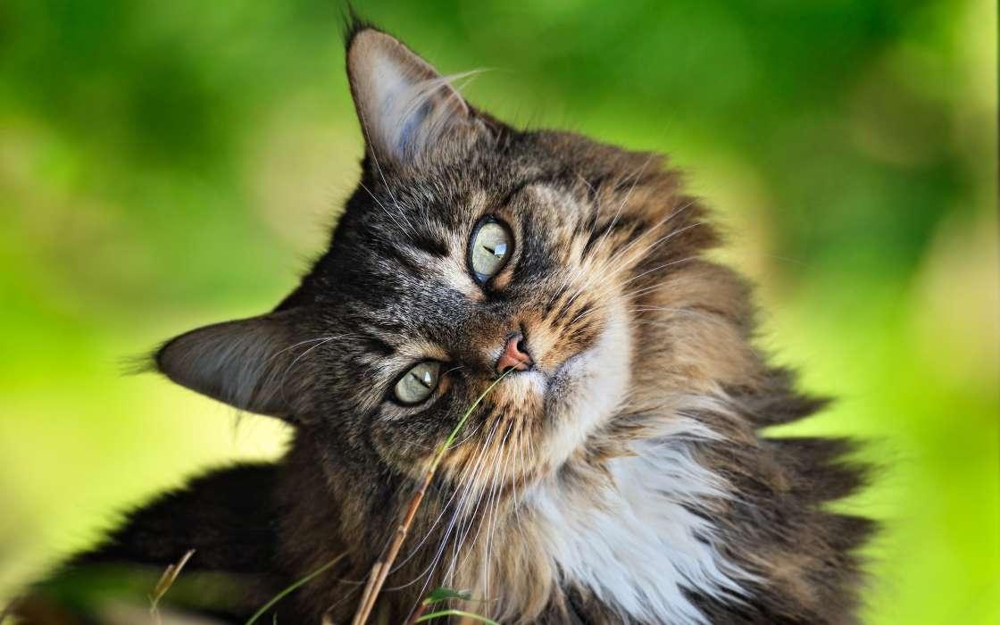 Кот картинка