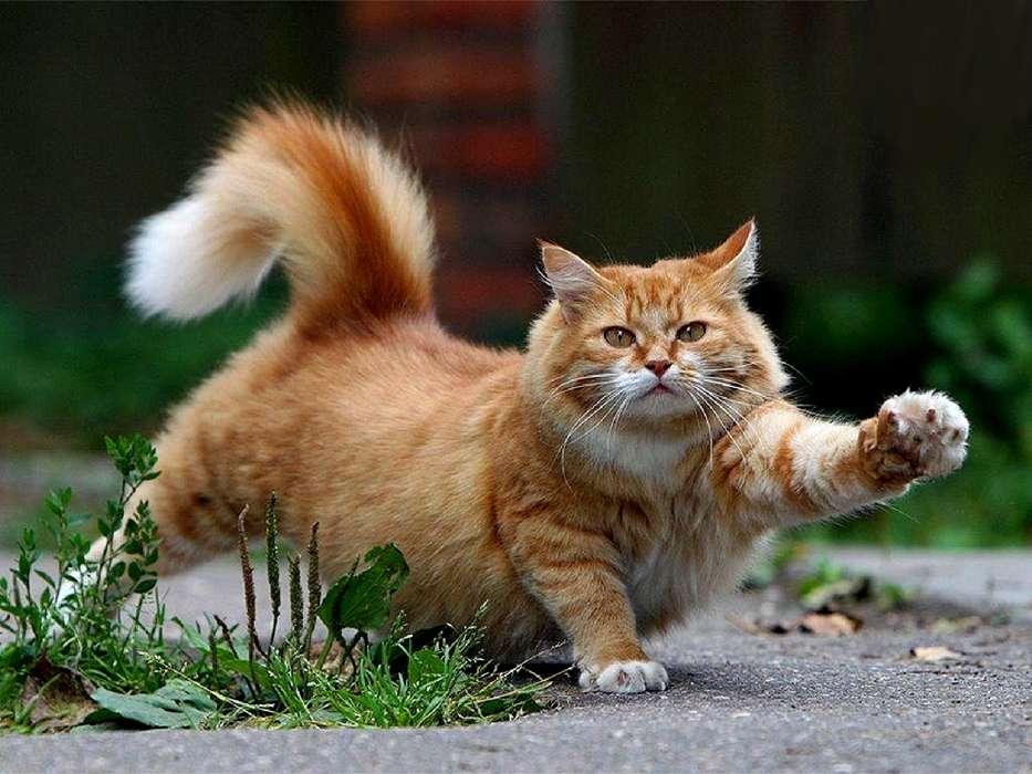 Download Bilder Für Das Handy Tiere Katzen Kostenlos 27344