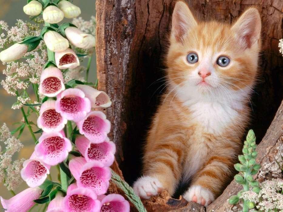 Картинки с кошками на телефон, поздравлением